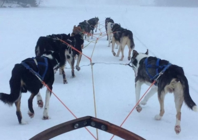 Dogsledding on the lake
